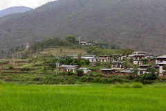 On the way to Chimi Lhakhang through the rice fields