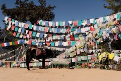 Horse and Prayer flags