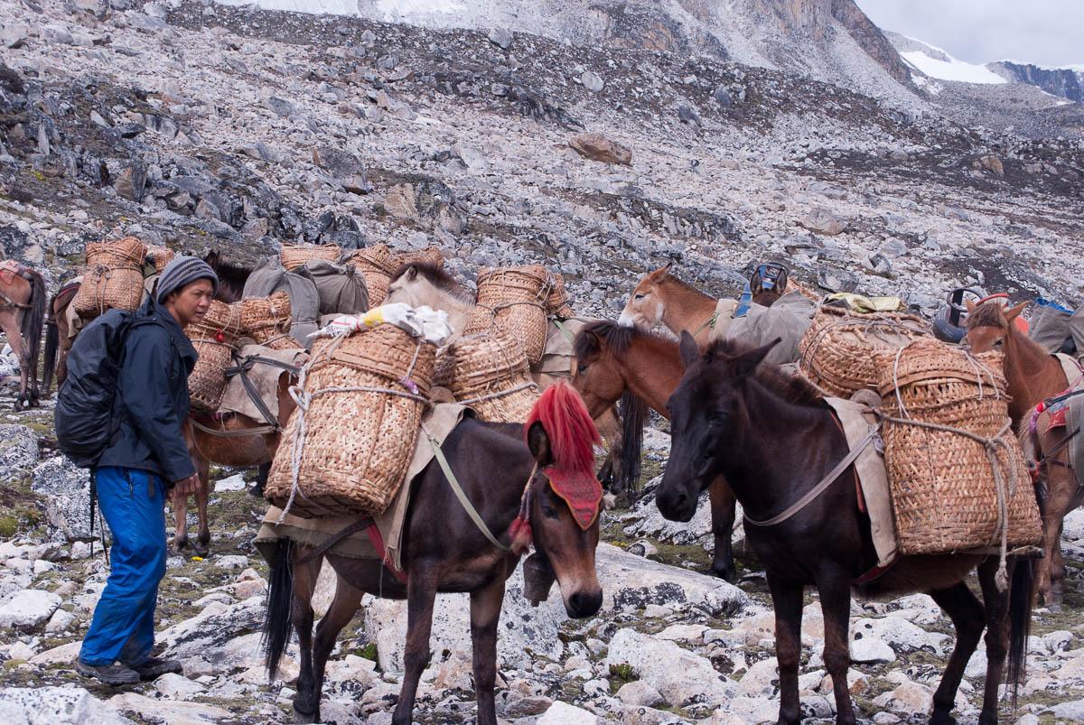 Horses used for trekking in Bhutan.